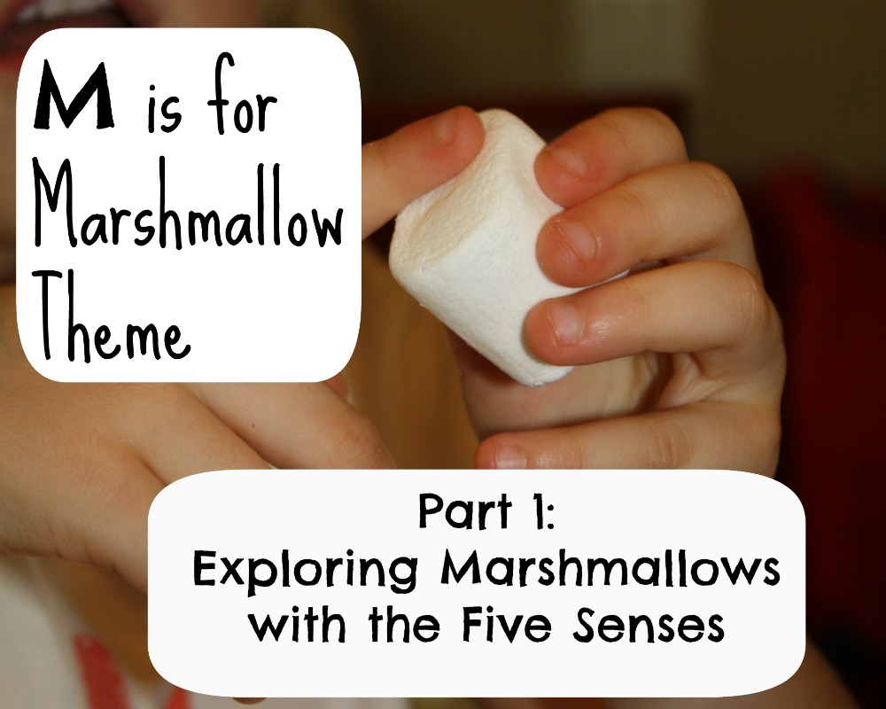 Marshmallow Five Senses