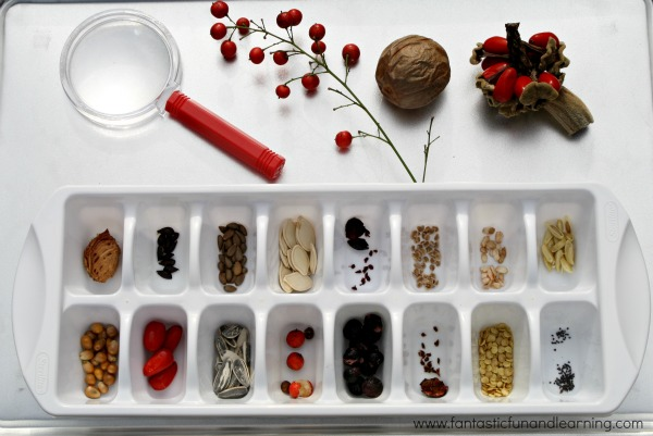 Are Seeds the Same Preschool Science