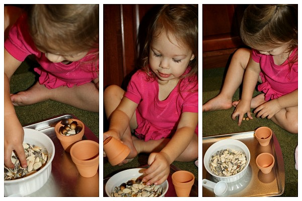 Toddler Activities with Seeds