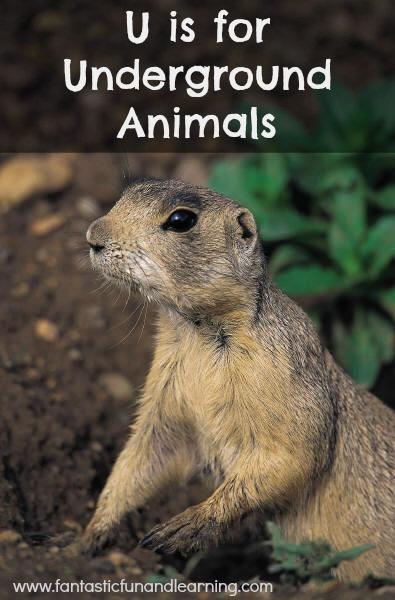 Underground Animal Theme Resources