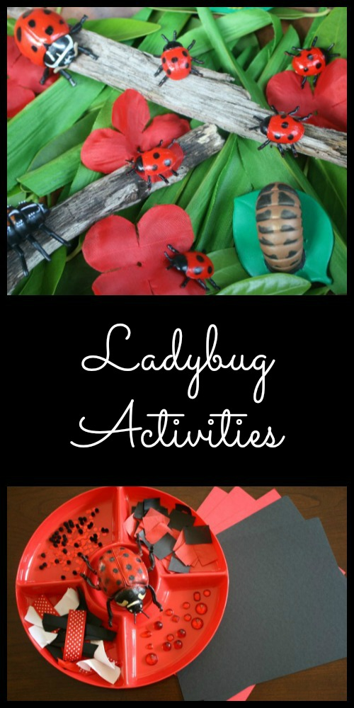 Ladybug Activities for Kids