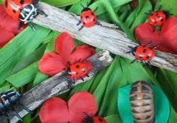 Ladybug Activities
