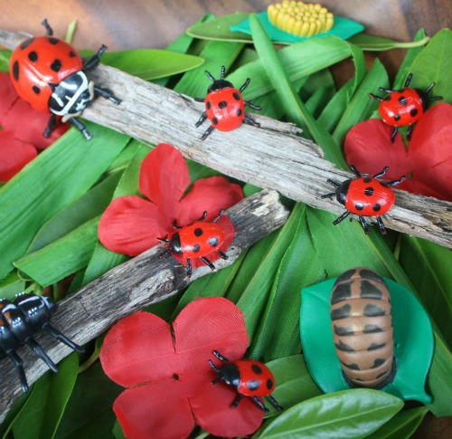 Ladybug Small World