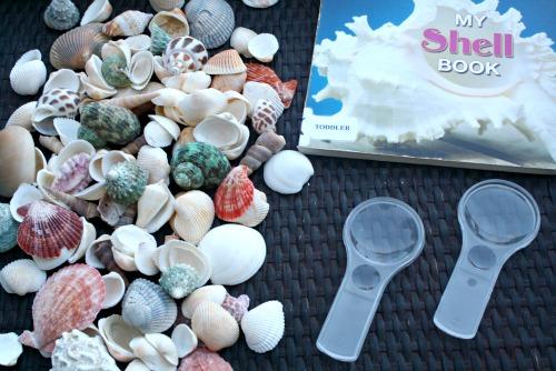 Invitation to Explore Shells-Preschool Science