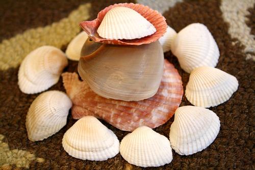 Shell Sculptures