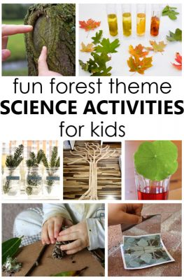 Fun Forest Science Activities for Kids