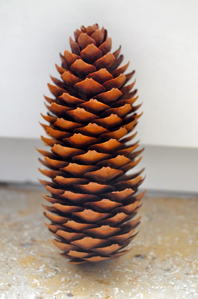 Pine cone predictor