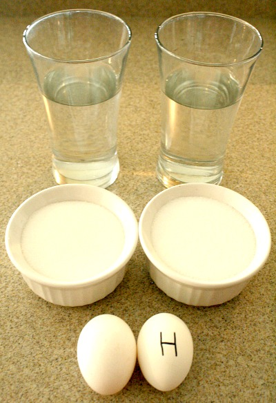 Floating Egg Science Experiment-Comparing Eggs