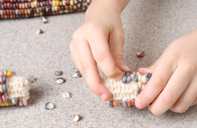 Indian Corn Fine Motor Activity for Preschoolers