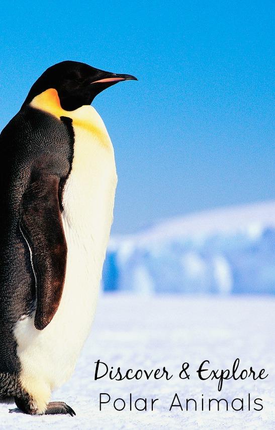 antarctic animals for kids - photo #27