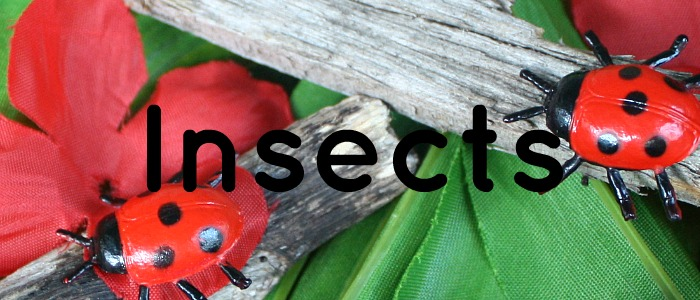 Insect Theme