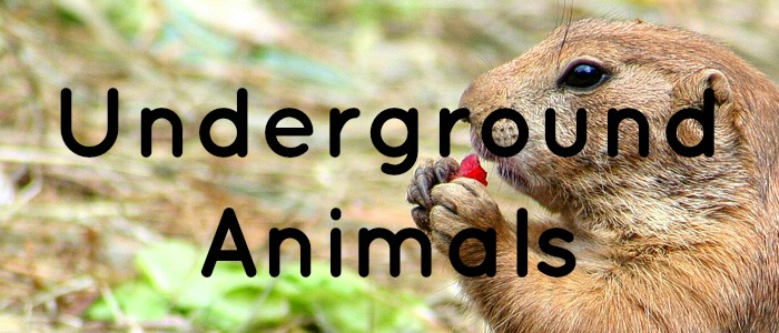 Underground Animals Theme