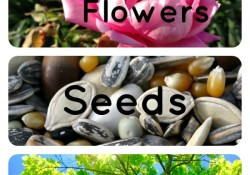 Plant Theme Activities for Kids