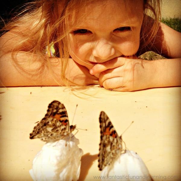Raising Butteflies