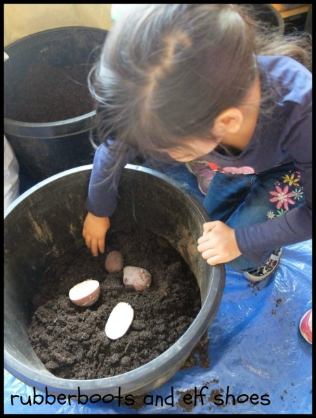 Planting Potatoes in Preschool