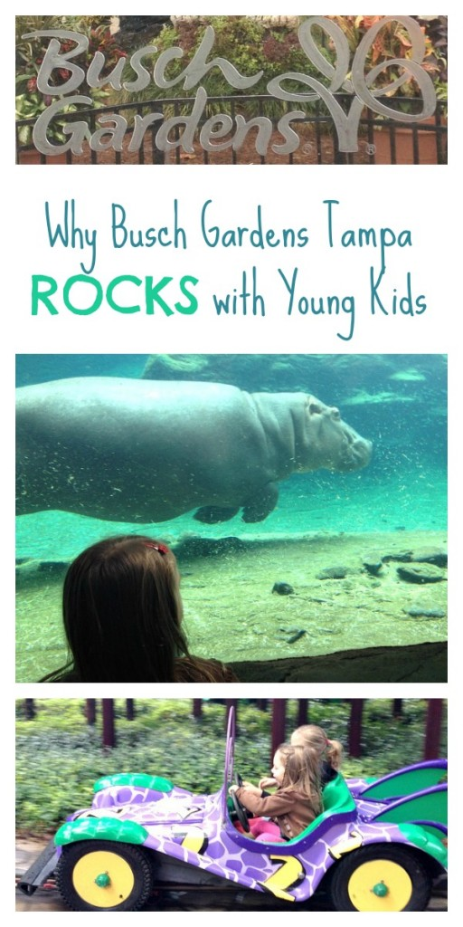 Five Reasons To Visit Busch Gardens With Kids Fantastic Fun Learning