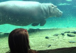 Five Reasons to Visit Busch Gardens with Kids