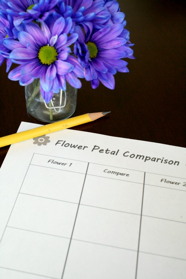 Comparing Numbers with Flower Petals--Free printable included