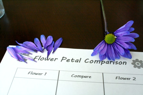 Comparing flowers-step 1