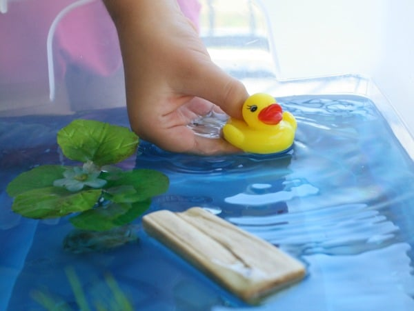 Duck theme water play