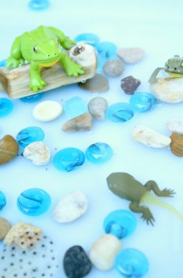 Frog Life Cycle Small World-Learn about the life cycle of a frog with this fun sensory bin idea for preschoolers
