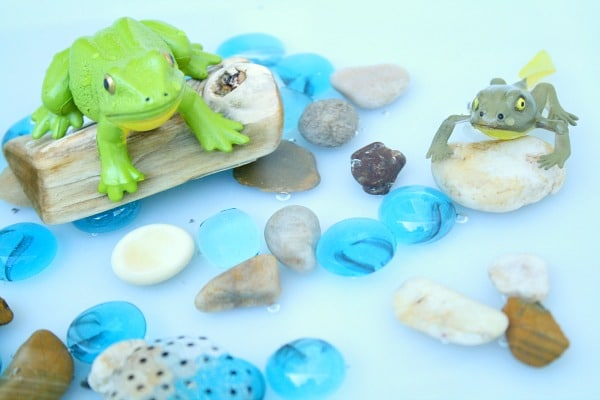 Frog Sensory Bin-Water Play and Life Cycle Activity for Preschoolers