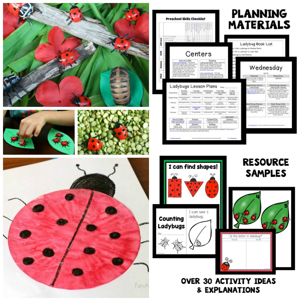 Preschool Ladybug Activities and Lesson Plans