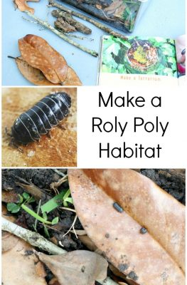 How to Make a Roly Poly Habitat with Kids