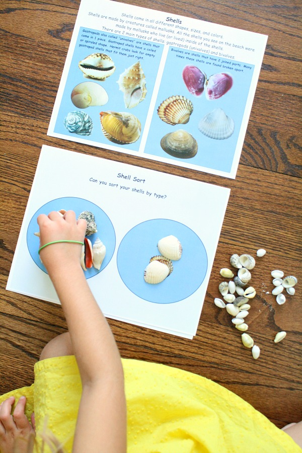 Sorting Shells with A House for Hermit Crab