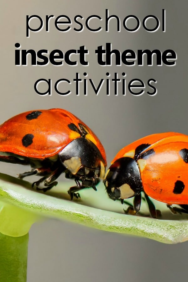 Preschool insect theme planning guide full of bug theme activities, sensory play, printable lesson plans and more for preschool learning and play #preschool #bugtheme #lessonplans
