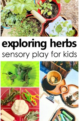 Exploring Herbs Sensory Play for Kids-Creative activities for learning about herbs with kids. Herb sensory play, fine motor activities, art activites, play dough invitations and more #preschool #sensory #kidsactivities