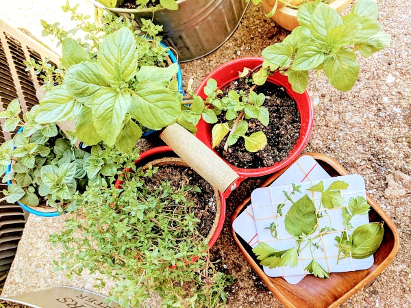 Kid-Friendly Herb Garden Sensory Play
