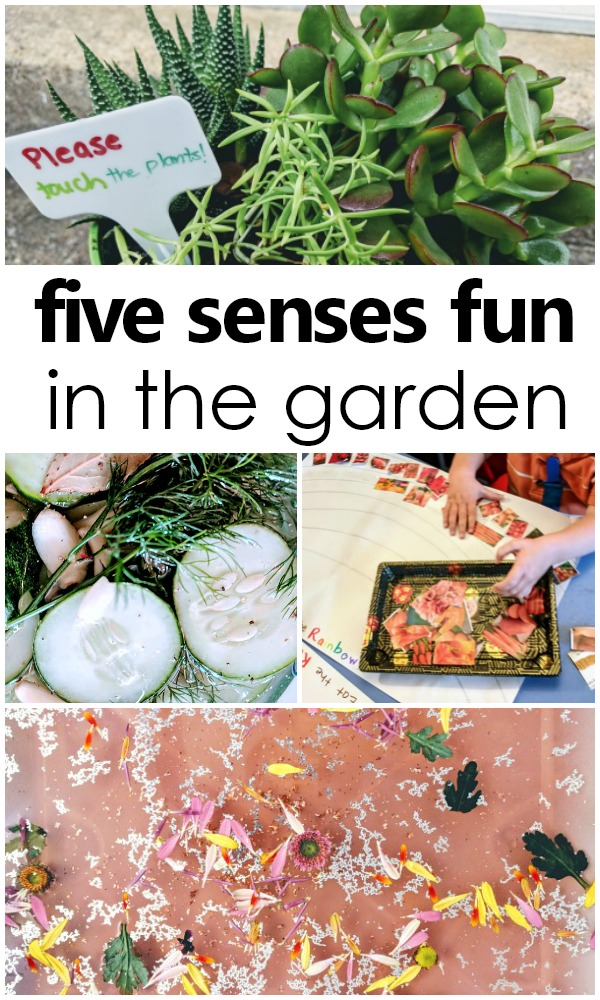 Using all five senses in the garden. Preschool and toddler five senses activities #preschool #fivesenses #sensoryplay