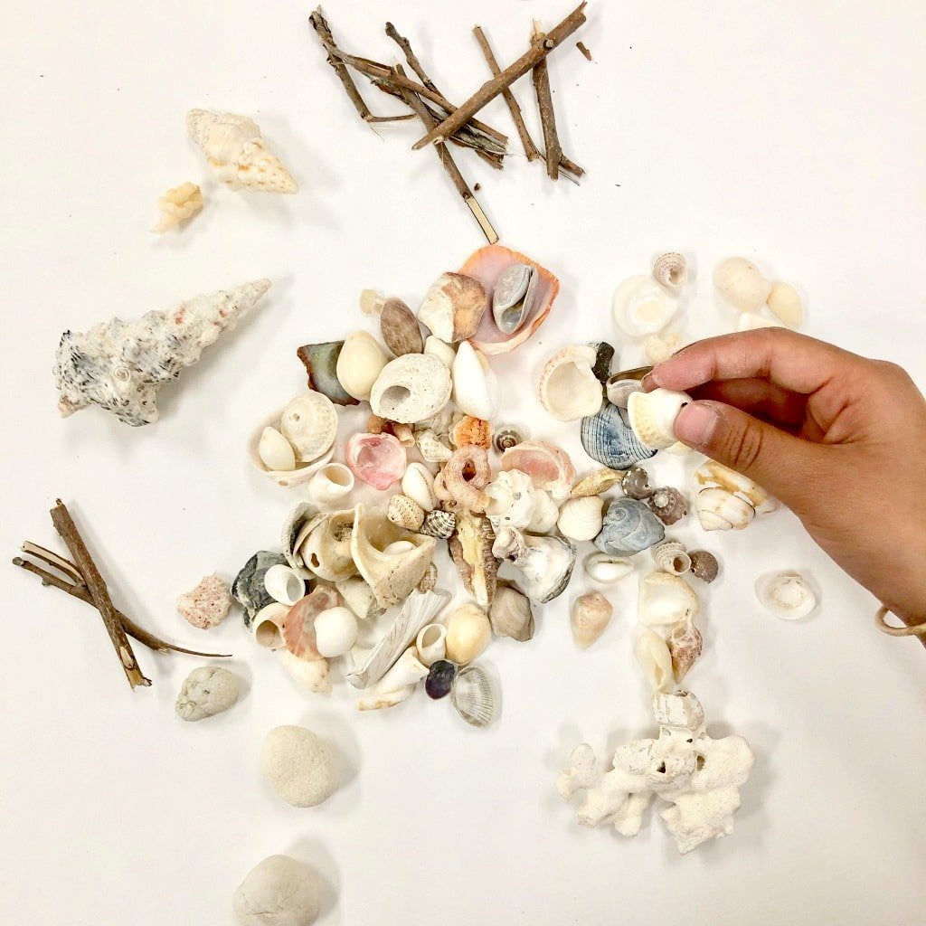 Gather materials for seashell portrait art activities
