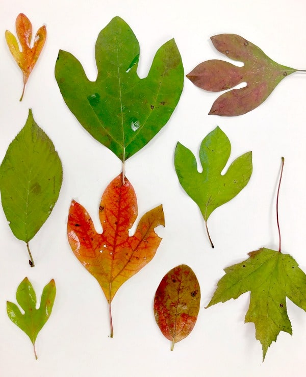Printing Fall Leaves Art Project For Kids - Fantastic Fun & Learning