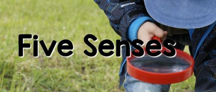 Five Senses Theme Preschool Ideas